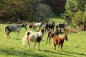 (dpt 71) A ADOPTER, MILAN et ZADIG, ânes communs, en famille d'accueil chez Charly71 - Page 3 52917810