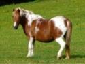 (dpt 71) A ADOPTER, MILAN et ZADIG, ânes communs, en famille d'accueil chez Charly71 - Page 3 P1040913