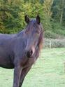 (dpt 71) A ADOPTER, MILAN et ZADIG, ânes communs, en famille d'accueil chez Charly71 - Page 3 P1060011