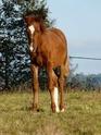 (dpt 71) A ADOPTER, MILAN et ZADIG, ânes communs, en famille d'accueil chez Charly71 - Page 3 P1060211