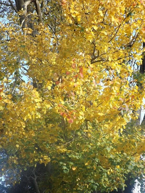 l'automne arrive... - Page 9 00112