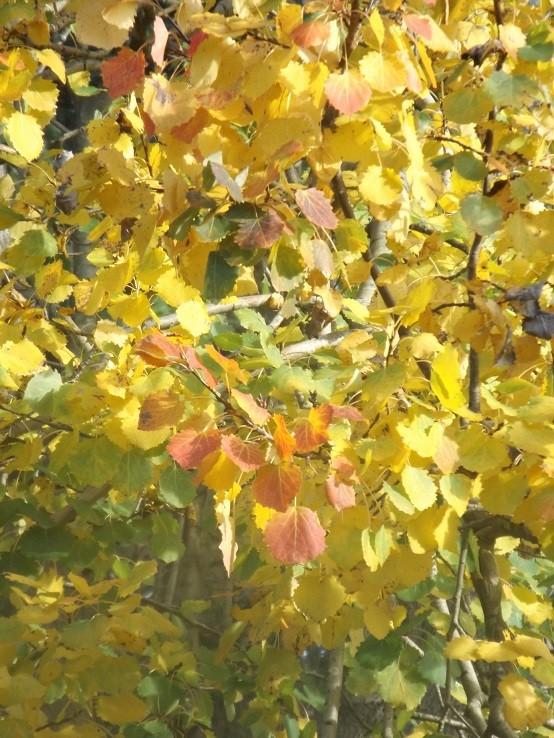 l'automne arrive... - Page 9 00211