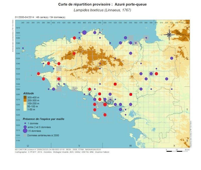 Azuré porte-queue (Lampides boeticus) - Page 2 Lampid10