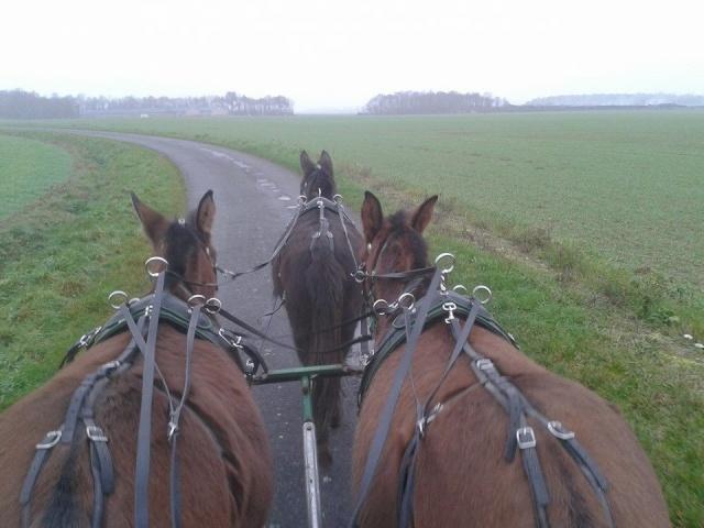 Mon projet d'attelage à 4 mules pas à pas ... - Page 3 10409110