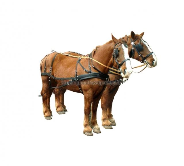 Mon projet d'attelage à 4 mules pas à pas ... - Page 3 Copyri10