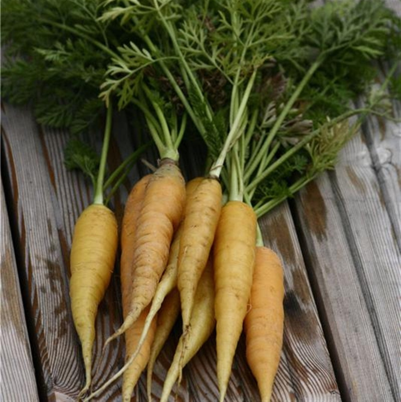 La carotte  - Page 2 I-autr10