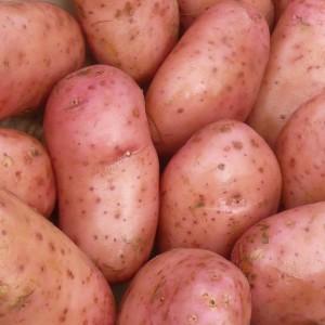 plants de patates - Page 6 Pomme-10