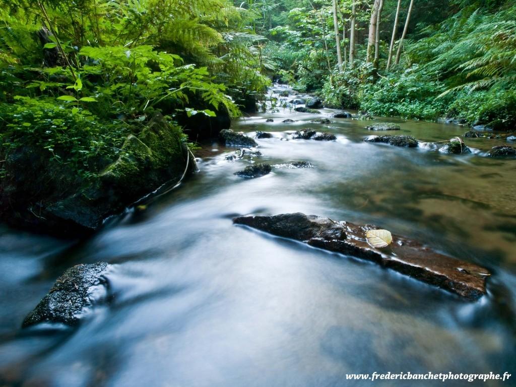 rivière dans la verdure Riviyr10