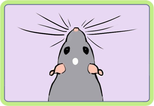 [GÉNÉTIQUE]  Marquages et dilutions du rat domestique Etoile10