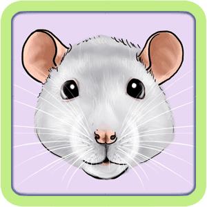 [GÉNÉTIQUE]  Types de poil, morphologie et couleurs d'yeux du rat Noirs10