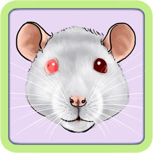[GÉNÉTIQUE]  Types de poil, morphologie et couleurs d'yeux du rat Oddeye10