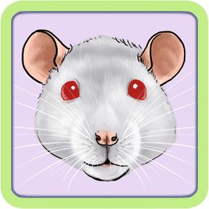 [GÉNÉTIQUE]  Types de poil, morphologie et couleurs d'yeux du rat Rubis10