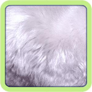 [GÉNÉTIQUE]  Types de poil, morphologie et couleurs d'yeux du rat Satin10