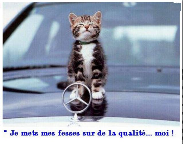 Images du jour sur les chats 10689510