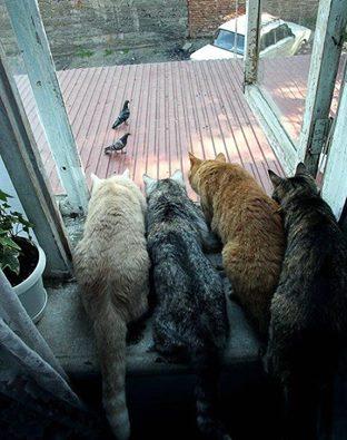 Images du jour sur les chats 10805510