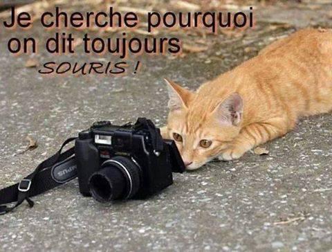 Images du jour sur les chats Img_8710