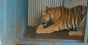 Mon expérience d'ASV et de Soigneur Animalier au Mexique Photo_12