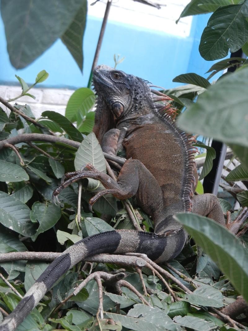 Mon expérience d'ASV et de Soigneur Animalier au Mexique Photo_16