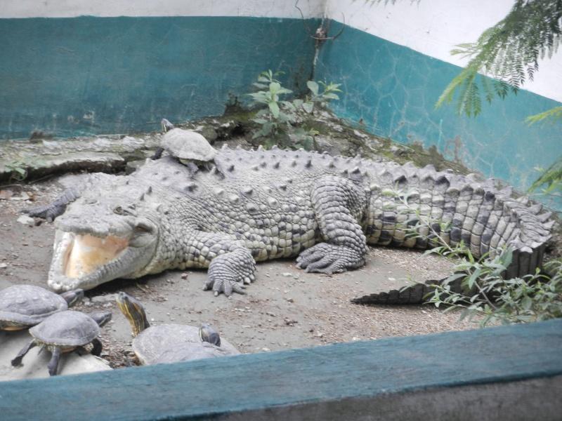 Mon expérience d'ASV et de Soigneur Animalier au Mexique Photo_18