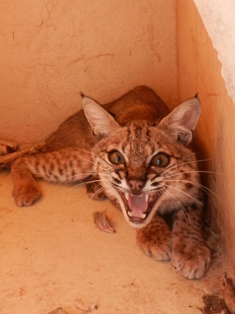Mon expérience d'ASV et de Soigneur Animalier au Mexique Photo_23