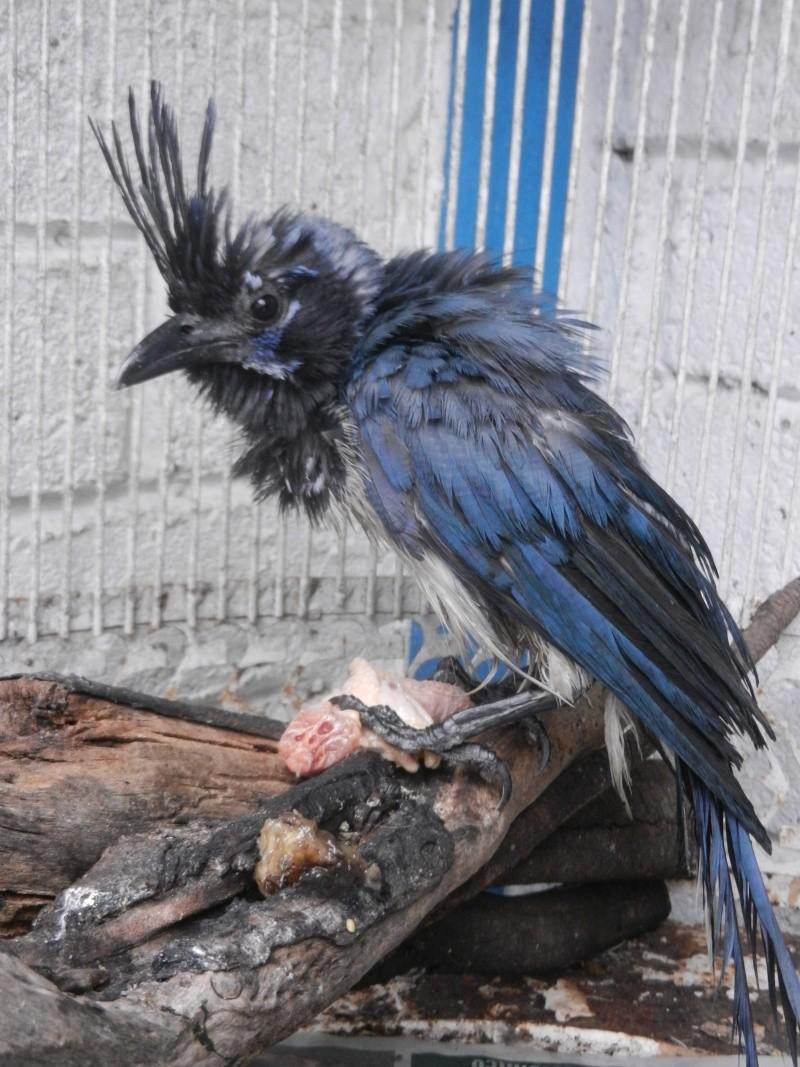 Mon expérience d'ASV et de Soigneur Animalier au Mexique Photo_29