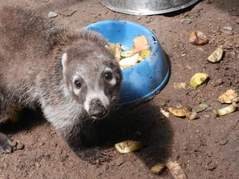 Mon expérience d'ASV et de Soigneur Animalier au Mexique Photo_30