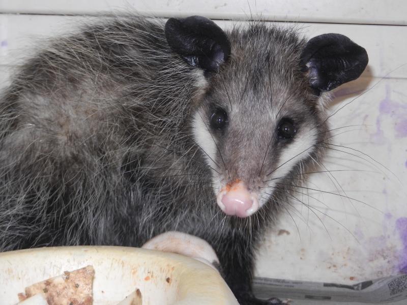 Mon expérience d'ASV et de Soigneur Animalier au Mexique Photo_32