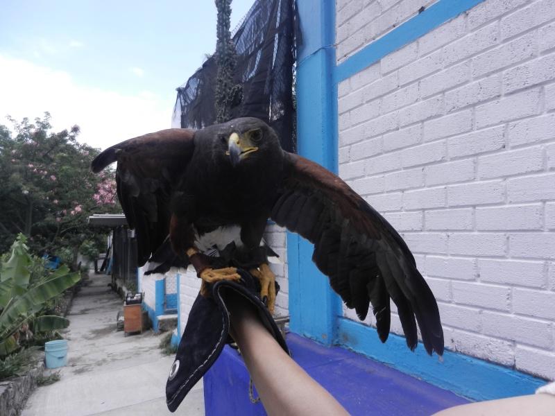 Mon expérience d'ASV et de Soigneur Animalier au Mexique - Page 2 Photo_41