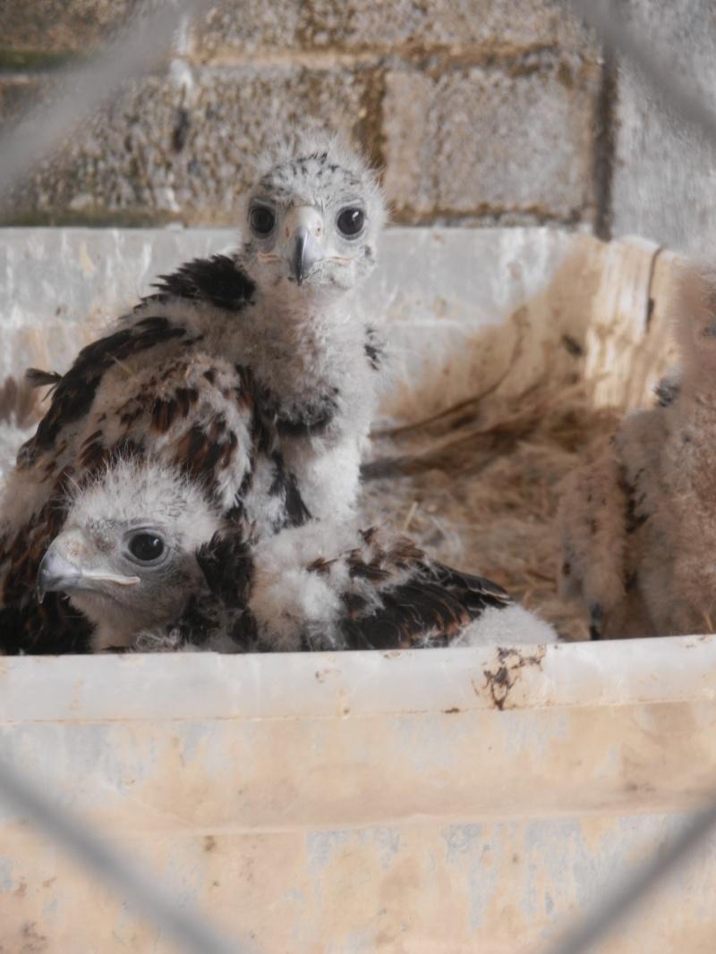 Mon expérience d'ASV et de Soigneur Animalier au Mexique - Page 2 Photo_43