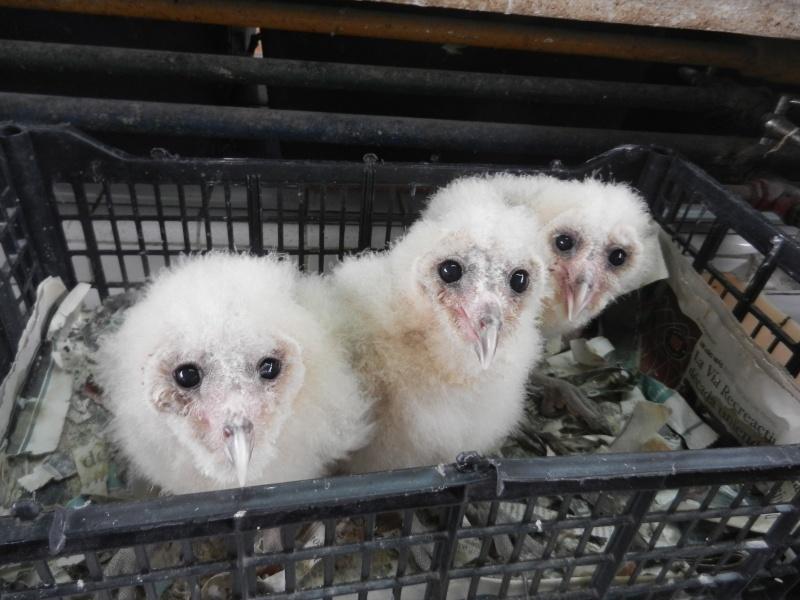 Mon expérience d'ASV et de Soigneur Animalier au Mexique - Page 2 Photo_44