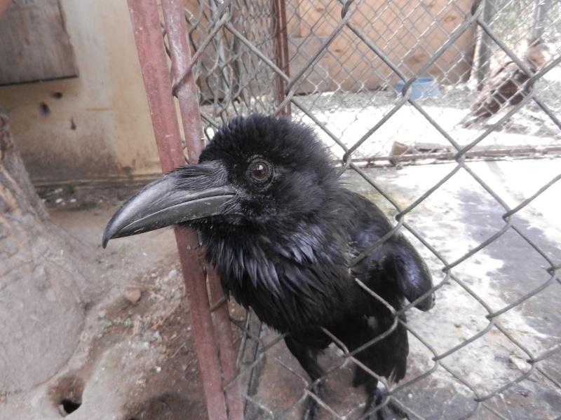 Mon expérience d'ASV et de Soigneur Animalier au Mexique - Page 2 Photo_46