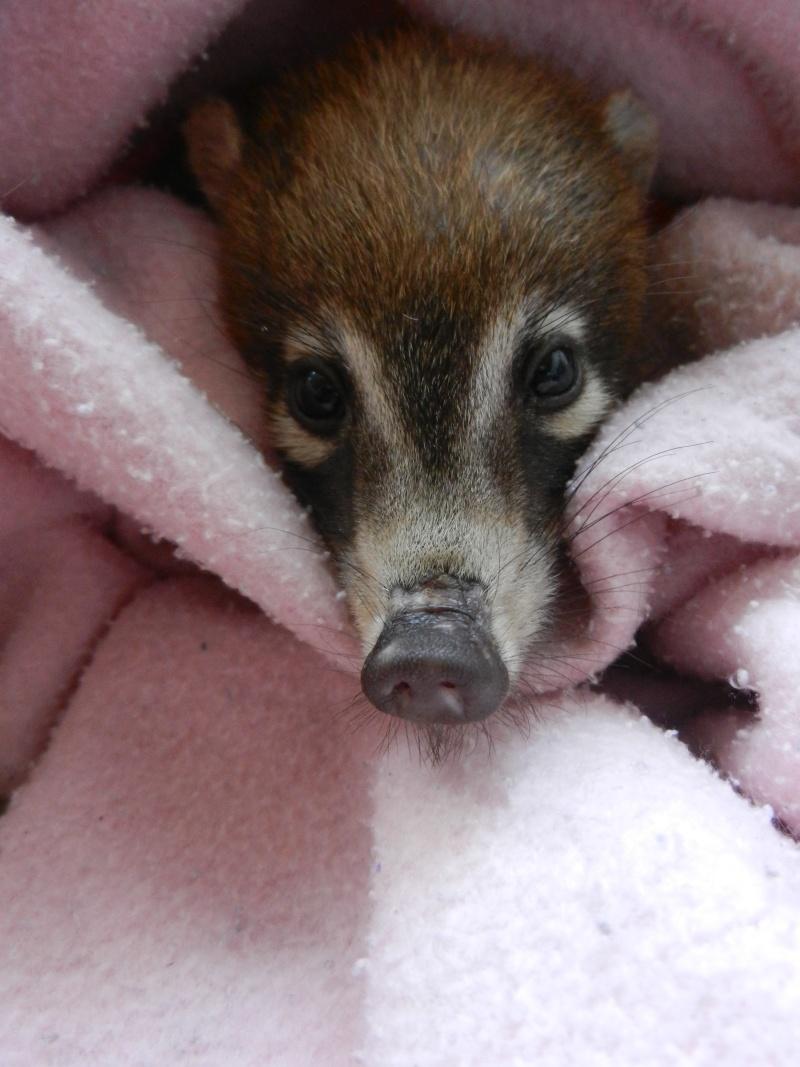Mon expérience d'ASV et de Soigneur Animalier au Mexique - Page 2 Photo_47