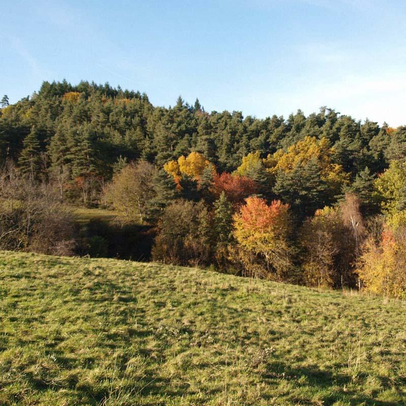 automne 2 Pb132813