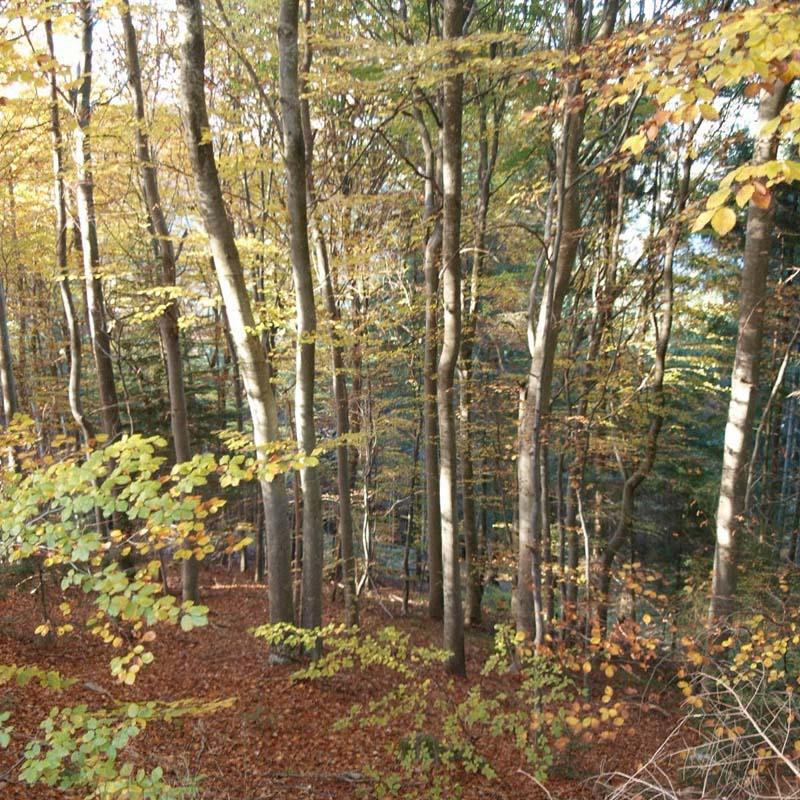 automne 2 Pb132814