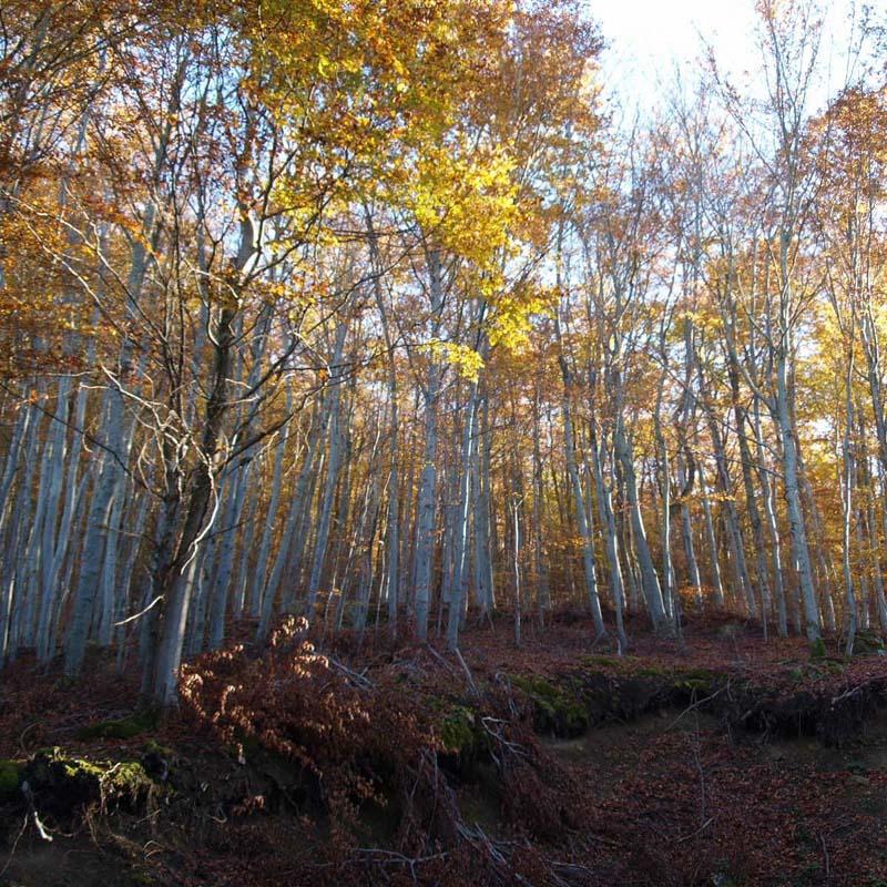 automne 2 Pb132815