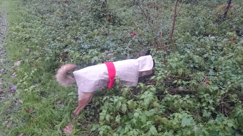 Manteau pour protéger de la pluie - Page 2 Imper11