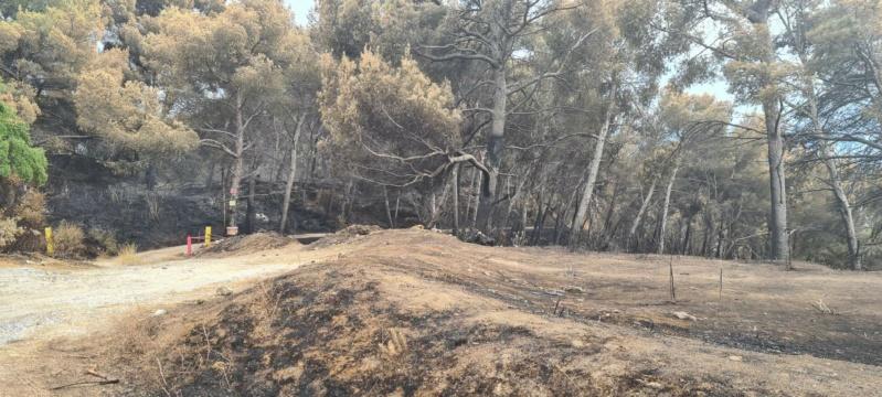 incendie de pinèdes à Istres Resize11
