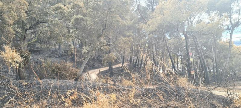 incendie de pinèdes à Istres Resize12