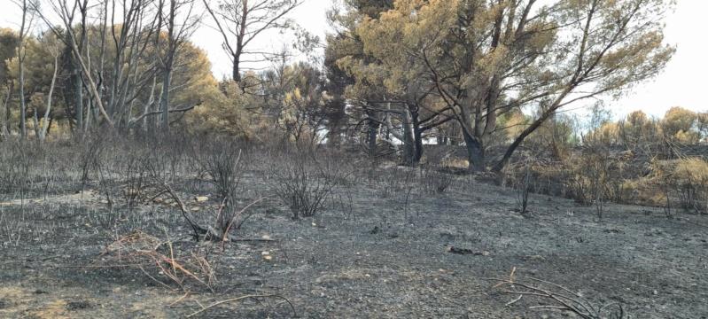incendie de pinèdes à Istres Resize13