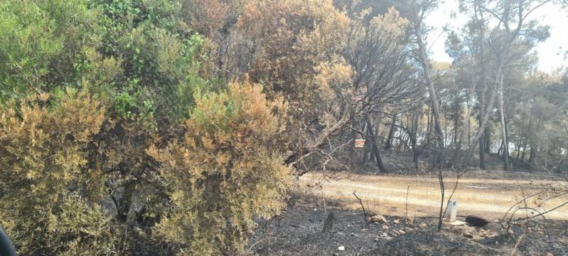 incendie de pinèdes à Istres Resize14