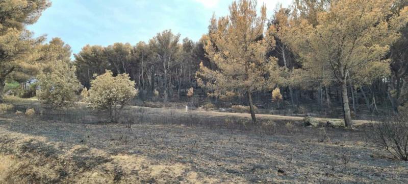 incendie de pinèdes à Istres Resize15