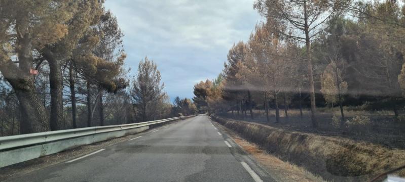 incendie de pinèdes à Istres Resize16