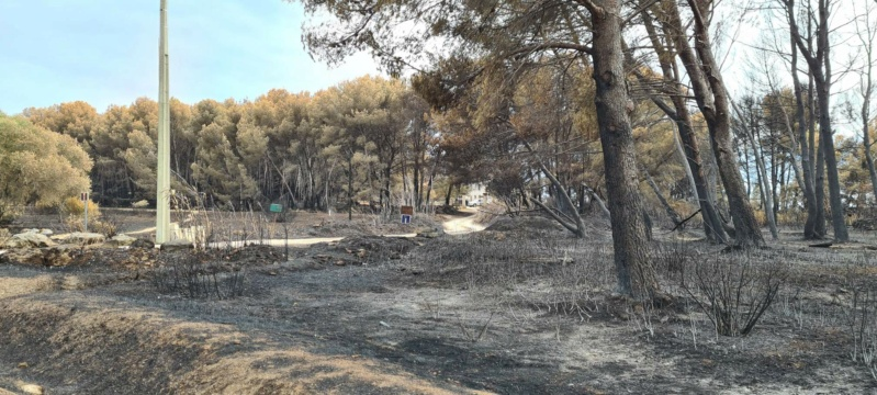 incendie de pinèdes à Istres Resize17