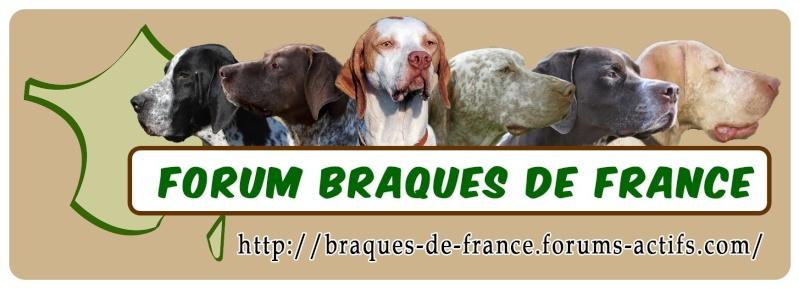 Braques de France