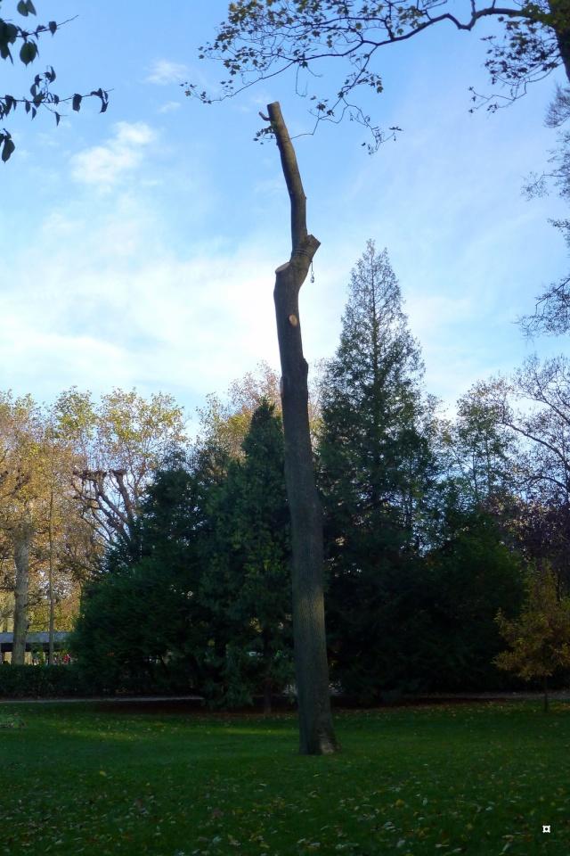 Choses vues dans le jardin du Luxembourg, à Paris - Page 2 Novemb12