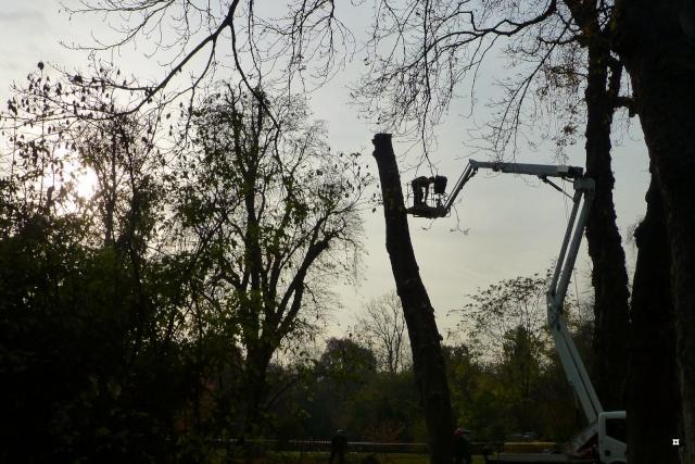Choses vues dans le jardin du Luxembourg, à Paris - Page 3 Photo_10