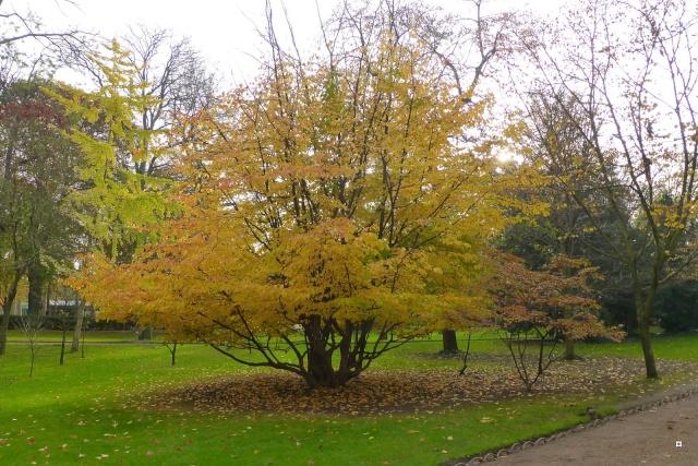 Choses vues dans le jardin du Luxembourg, à Paris - Page 3 Photo_14