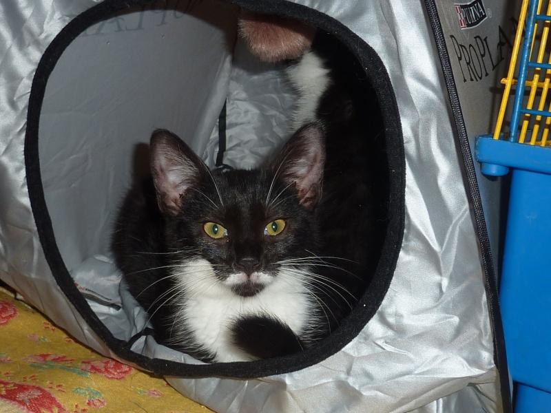 Jazzynou, femelle, 09.2014, noire et blanche  P1160713