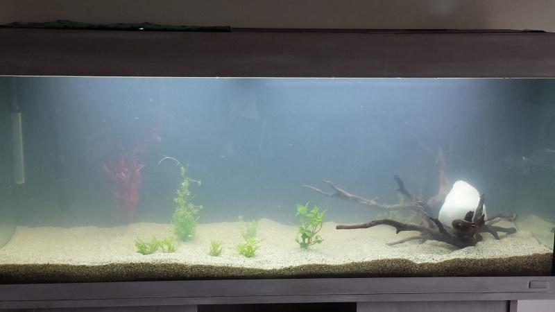 mon 240L planté Aqua_a10
