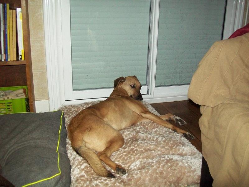 Tzupy, chien de notre quartier, mâle très sociable, né en 2009. 15993510